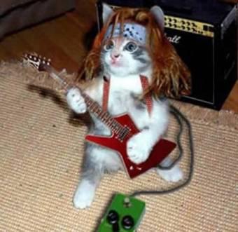 gato cantante