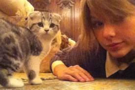 El gatito de Taylor Swift ¡Creo que vi un moxo gatito!
