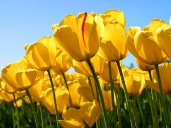 de lo buena que es parece una flor