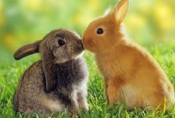 Conejo!!!