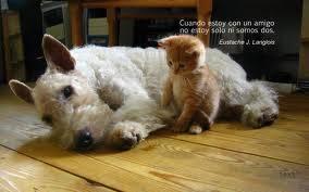 Gatito llama al perrito