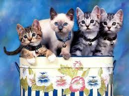 Los Gatos!!