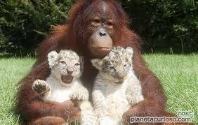 ENTRE ANIMALES DE DIFERENTES ESPECIES EXISTE TERNURA!!!